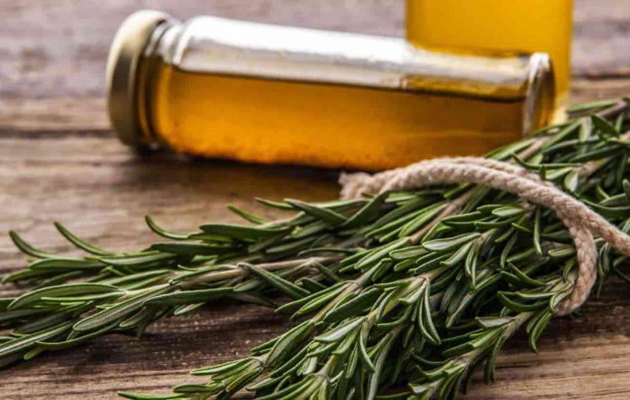 usos y propiedades del aceite de romero