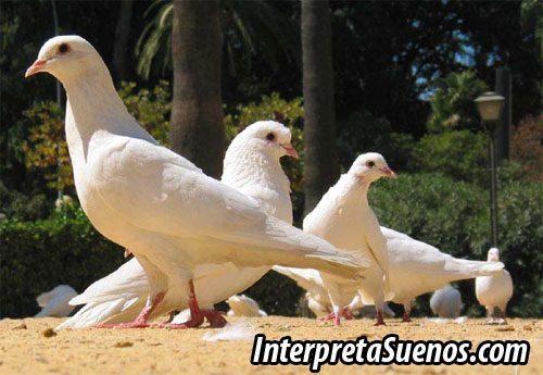 Significado De Soñar Con Palomas Sueños Con Palomas
