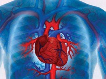 Cada año mueren 1,8 millones de personas por enfermedades cardiovasculares