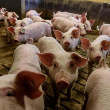 """La UPA califica de """"ruina"""" los efectos del Covid-19 sobre la ganadería"""