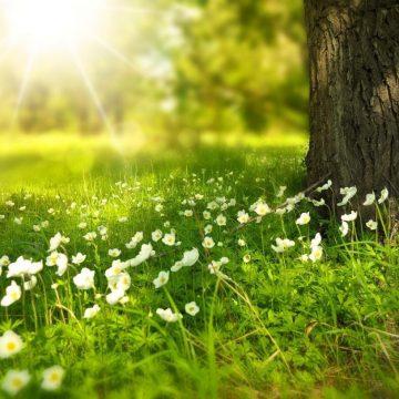 Mañana comienza la primavera después de pasar el invierno más caluroso de los últimos 80 años