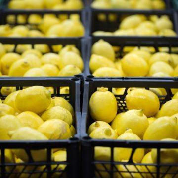 Las ventas del limón murciano no escatiman en el mundo