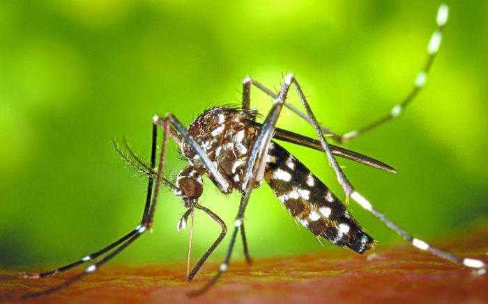 Salud refuerza la vigilancia frente al mosquito tigre en colaboración con los ayuntamientos