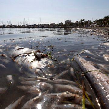 """La Región de Murcia contrata a 90 operarios para limpiar las playas del Mar Menor """"ante la inacción"""" del Estado"""