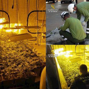 Detenido un vecino de Totana que ocultaba una plantación de marihuana en una tienda de compra-venta de coches
