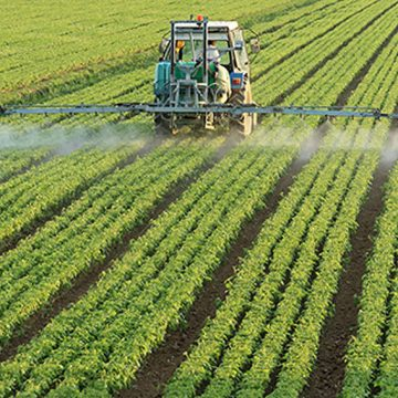 Suspensión temporal en Mazarrón de la actividad en una explotación agraria por 12 positivos