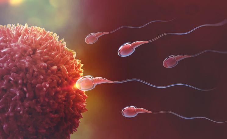 La UMU y el IMIB descubren una proteína del espermatozoide esencial para que se produzca la fecundación