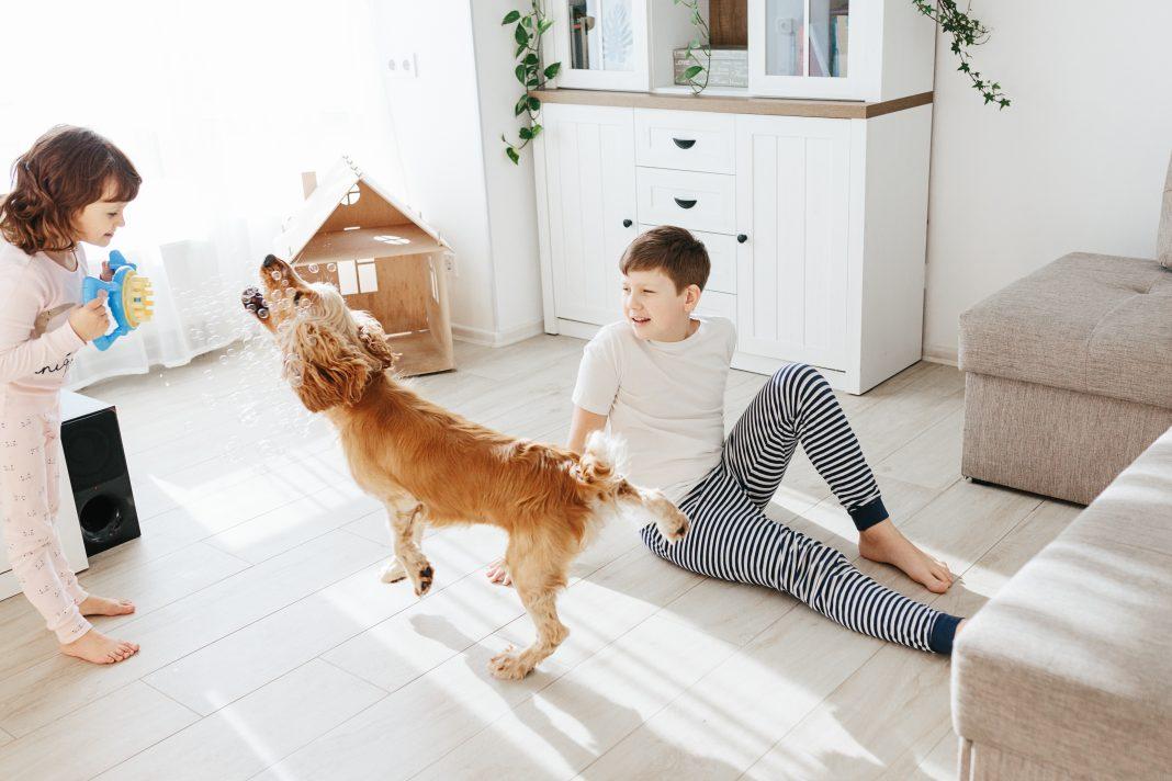 Maneras de enseñar a los niños a cuidar de una mascota de forma correcta