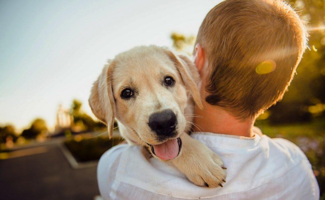 cuida-mascota