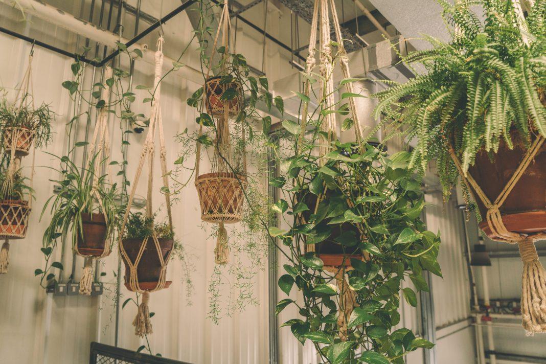Cuida la decoración de tu hogar con plantas colgantes