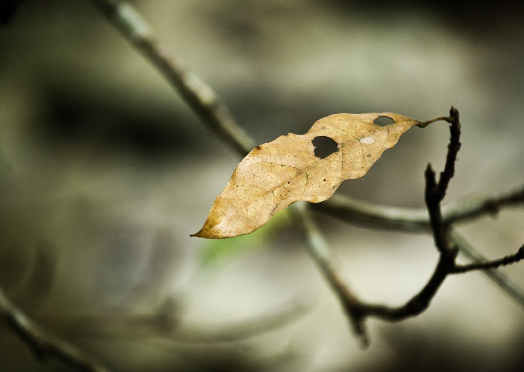 Consejos para conseguir una decoración original con hojas secas