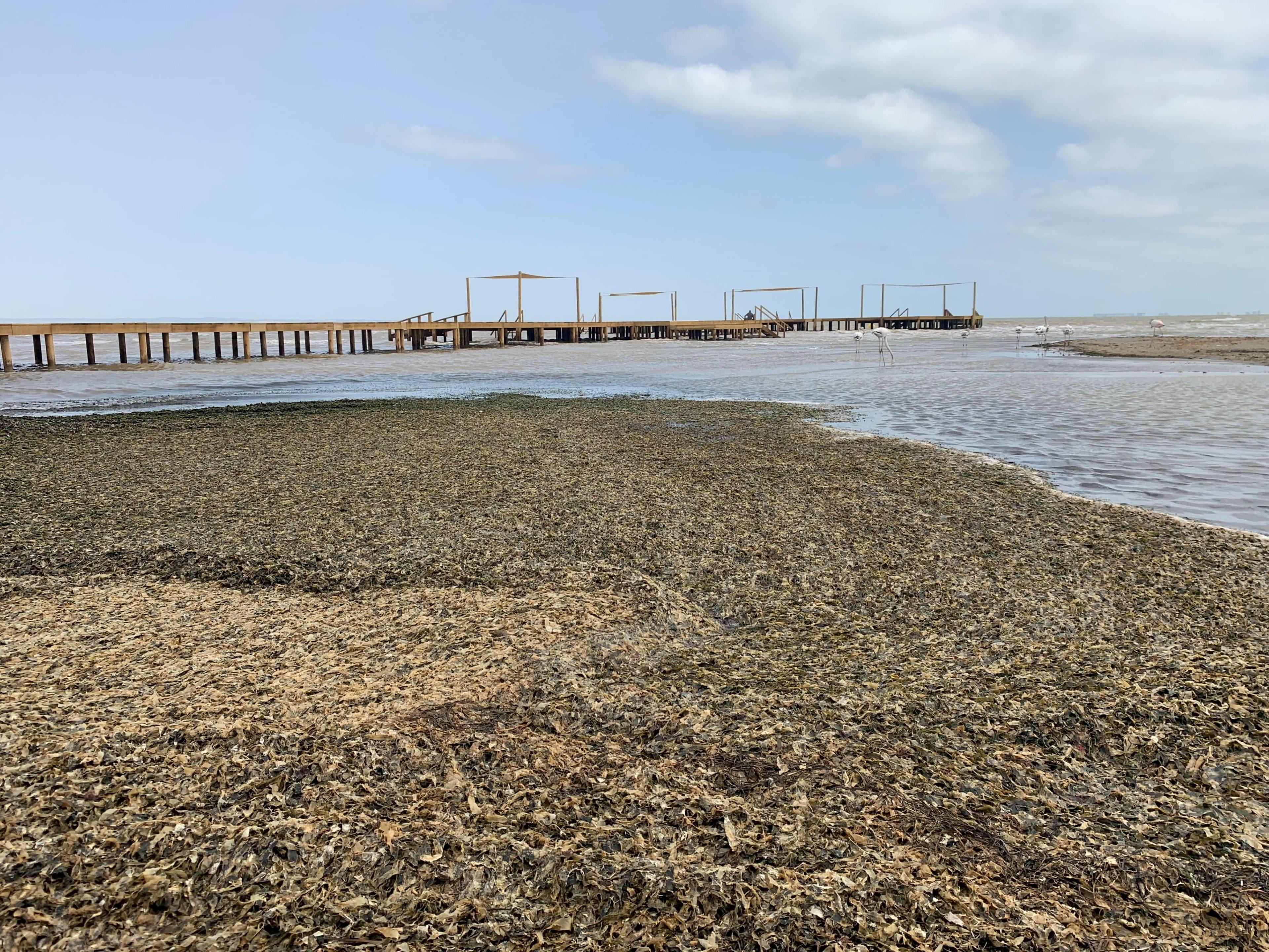 Orilla de la playa de Los Urrutias llena de algas, con un balneario al fondo