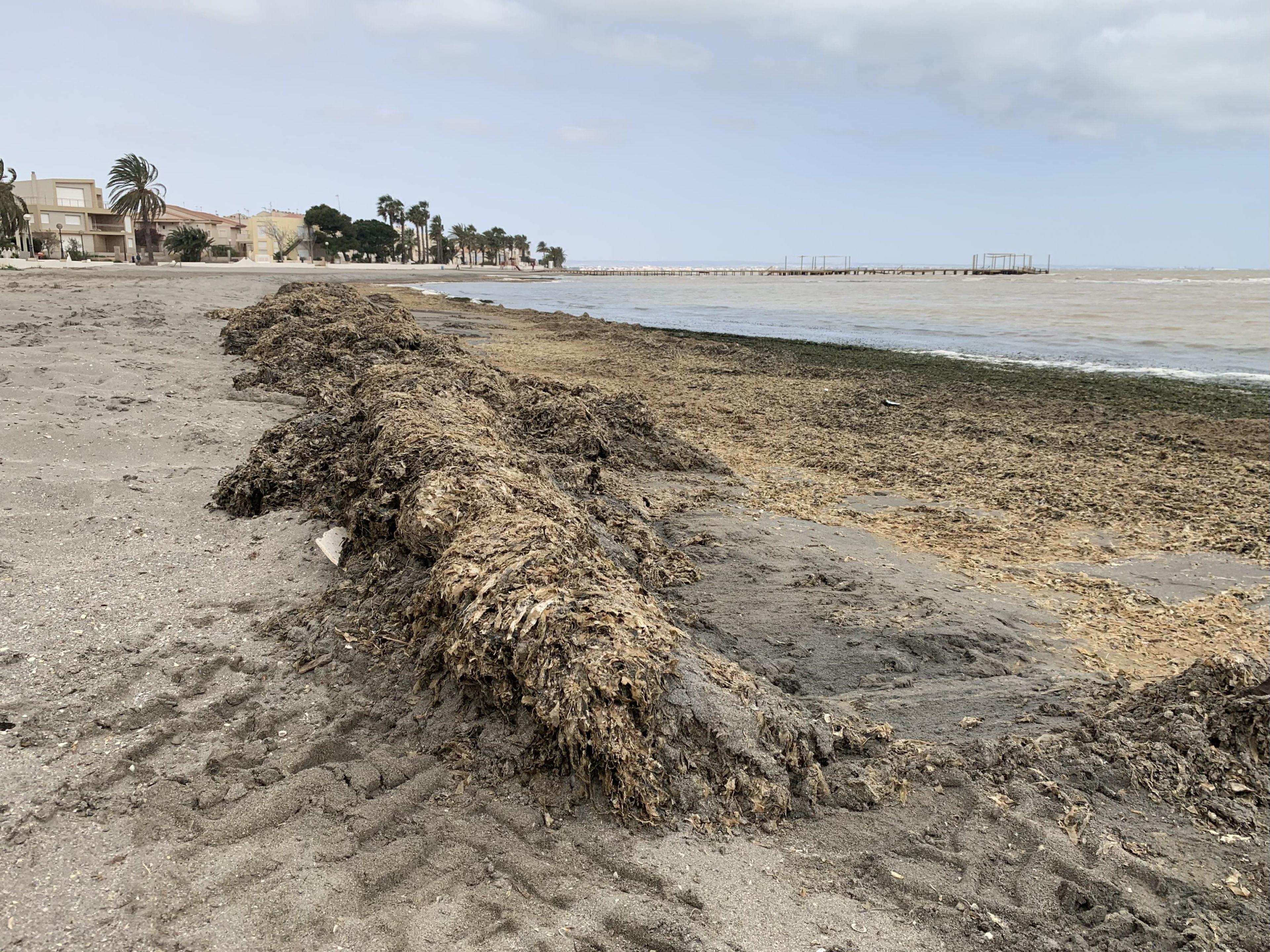 Algas acumulados en la playa de Los Urrutias