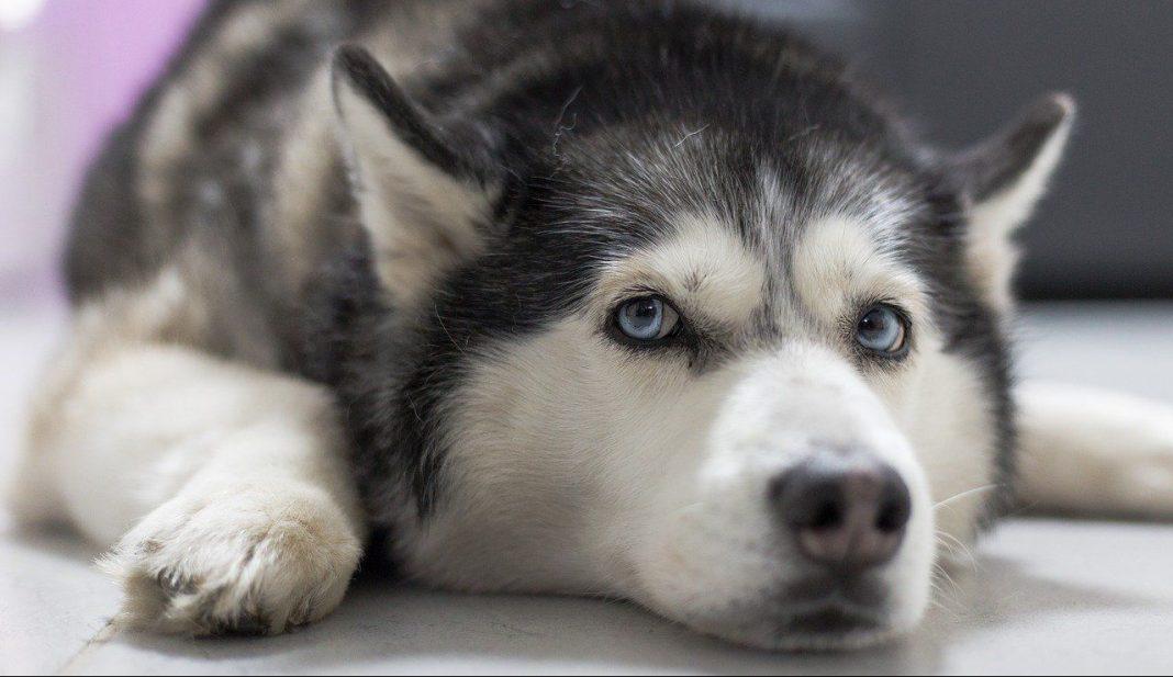 Un perro salva la vida de un bebé abandonado en la calle