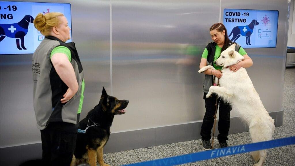Perros que detectan la Covid-19 más rápido y con la misma fiabilidad que las PCR