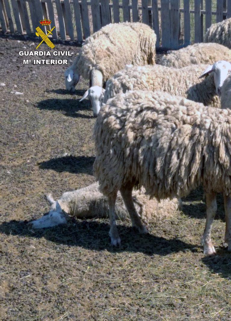 Investigan una granja de La Aljorra por numerosos casos de maltrato animal