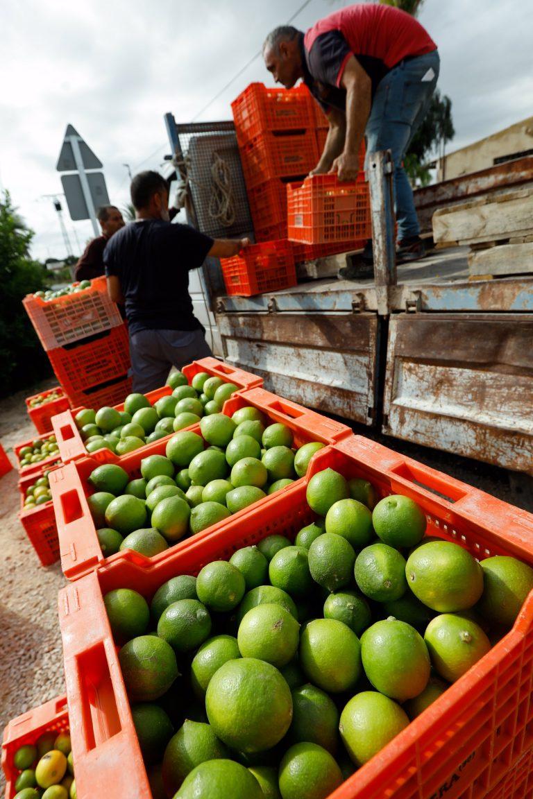 La CARM convoca ayudas por importe de más de 3,1 millones para el asesoramiento a explotaciones agrarias y ganaderas